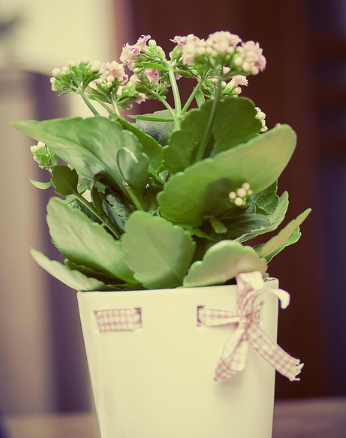 3 Special Occasions for which You Can Buy Green Plants as Gifts