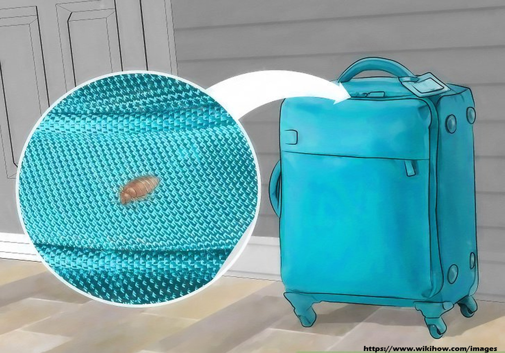 How to Avoid Transferring Bed Bugs With Your Luggage